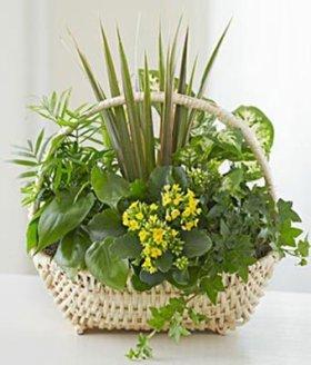 Blooming Rose – Eshopclub Same Day Flower Delivery – Fresh Flowers Plants – Wedding Flowers Bouquets – Birthday Flowers – Send Flowers – Flower Arrangements