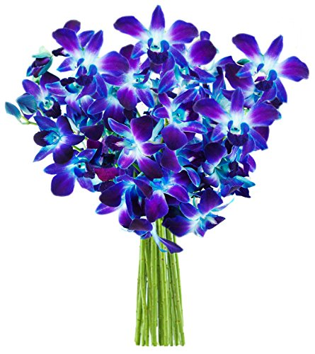 Blue Orchid Bouquet (10 Stems) – Without Vase
