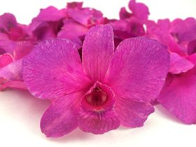 Preserved Blue Orchid Flowers -Box of 30 (Purple)