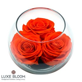 Luxe Bloom Tangerine Preserved Roses | Lasts 60 days | Gorgeous Spring Flowers | 3 Tangerine (orange) roses & greens in a 4″ glass bubble | Perfect gift for Mother's Day or any occasion