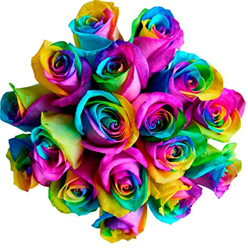 12 Stems – Fresh Cut Rainbow Roses from Flower Explosion