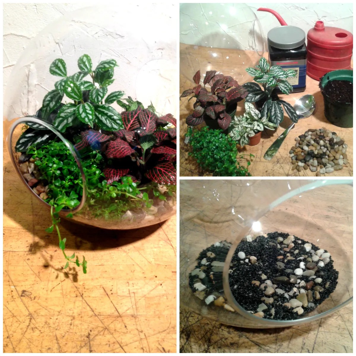 Terrariums Part Two Flowers Talk Tivoli
