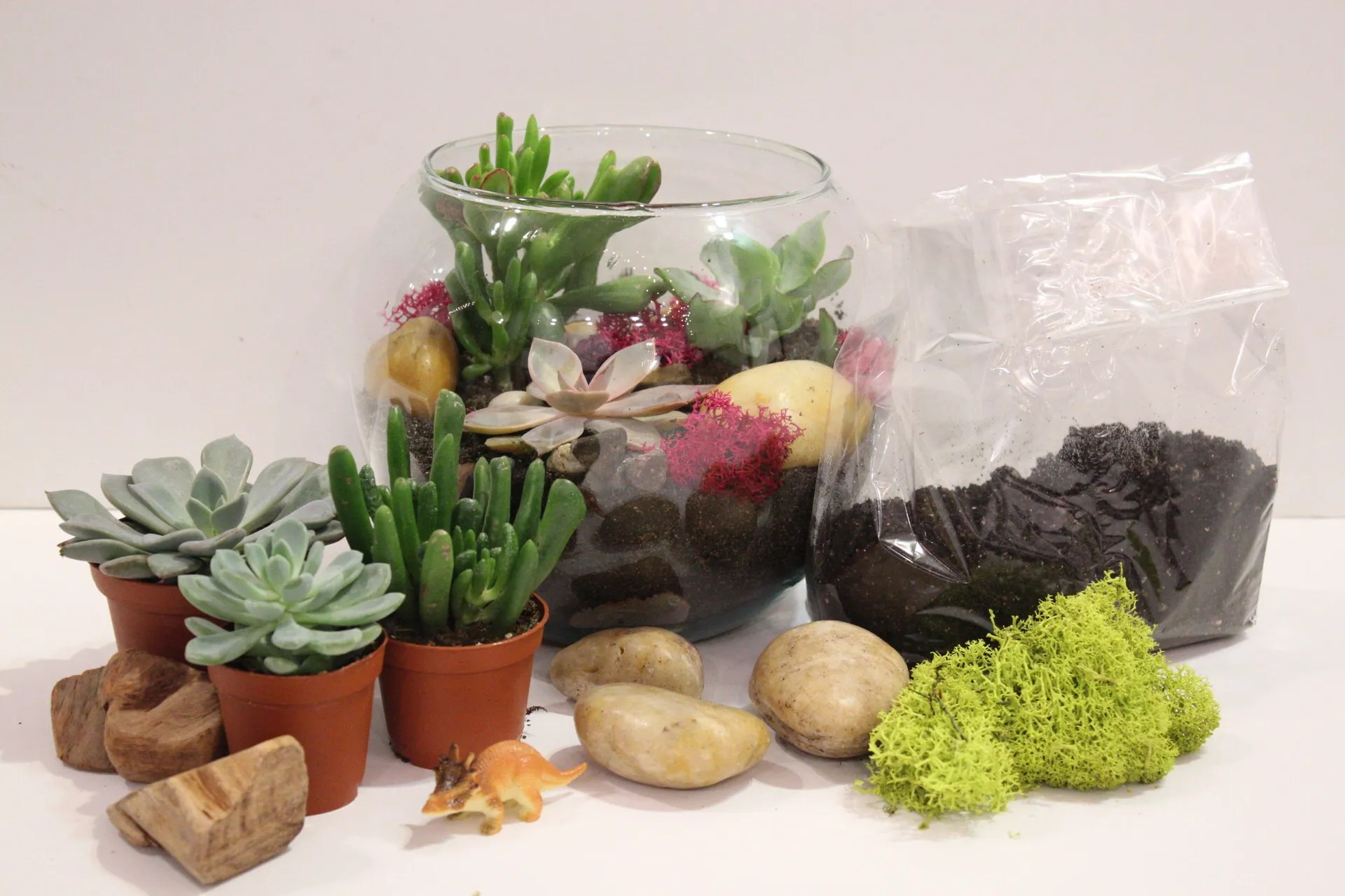 Diy Succulent Terrarium Kit Flowers Talk Tivoli