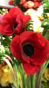 Remembrance Day Gratitude
