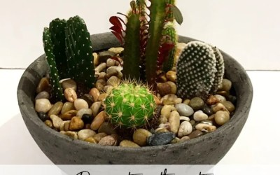 Low Maintenance Decorating With Cacti