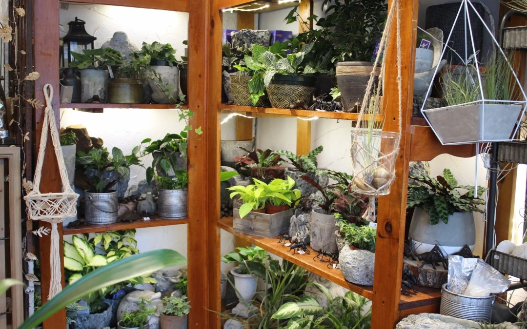 Shelf full of plants