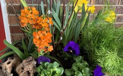 Make Your Own Outdoor Spring Planter
