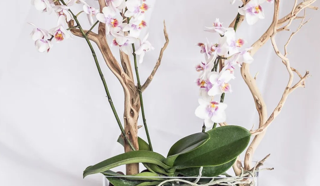 Caring For Orchids Made Easy