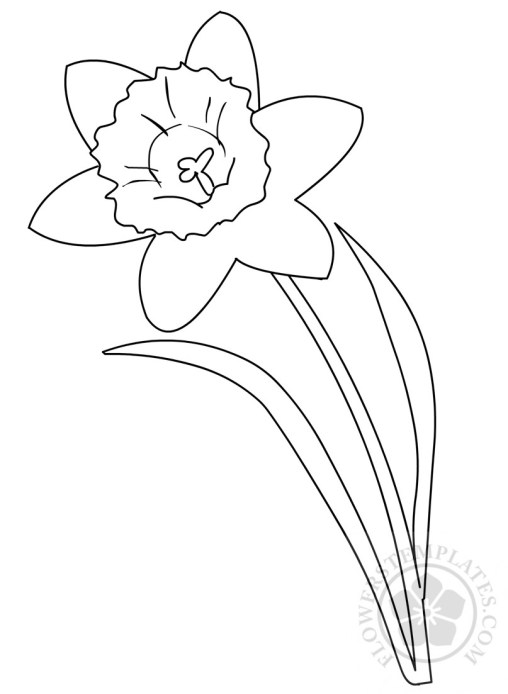 template of a daffodil - flowers templates free templates shapes pattern and