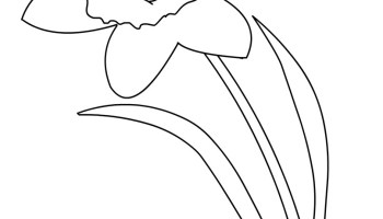 daffodil with leaves and stem coloring page