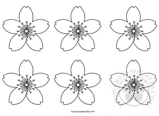 Cherry Blossoms Coloring Page Flowers Templates