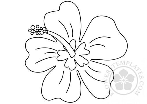 free coloring pages flowers hawaiian - photo#45