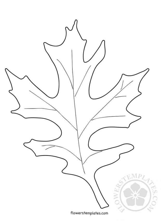 Oak Leaf Shape Coloring Page