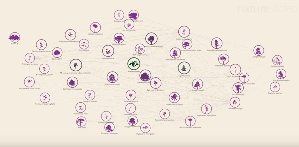 Network Visualization Flowingdata