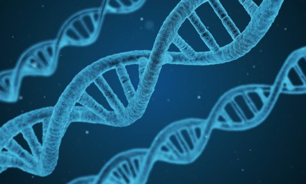 Conflicting Study Results: Do DNA Breaks Hold Answers?