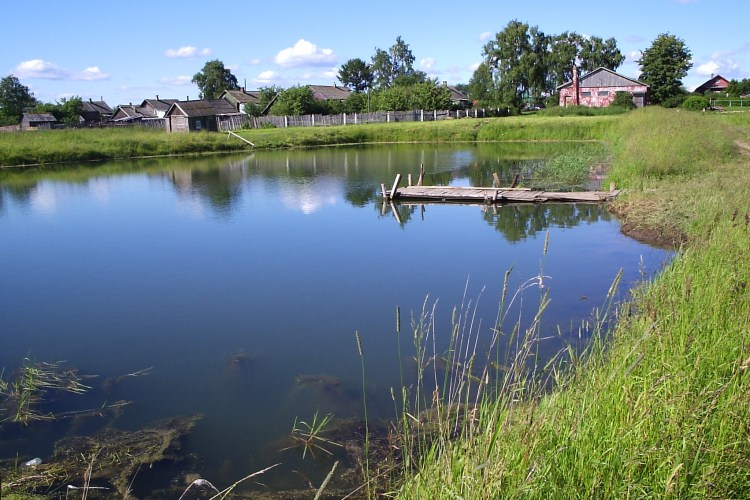 How to build a Homestead Pond