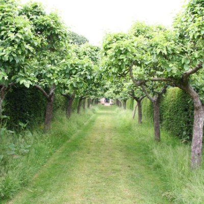 Dwarf Fruit Tress in your Orchard