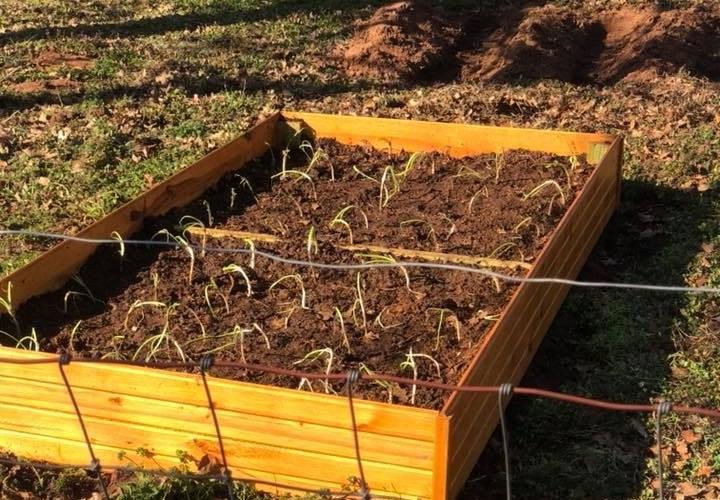 Top 10 Benefits of Raised Garden Beds