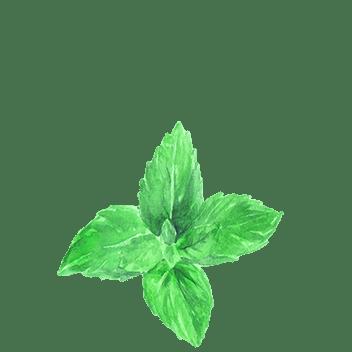 Mint flavoring