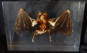 """Collectible-USA-Vampire/Gothic fans/Popular culture-7"""" x 4 1/2"""" x 2"""""""