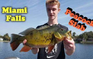 Peacock Bass Fishing Miami Falls