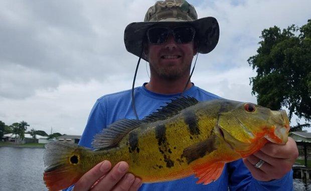 MLB Peacock Bass Fishing Charter