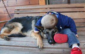 German Shepherd with boy
