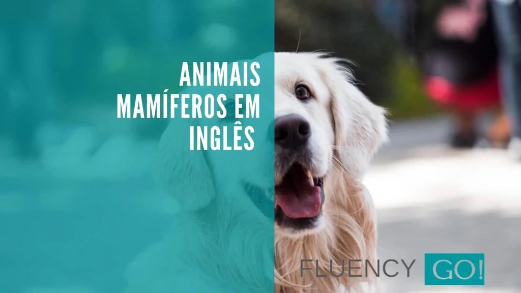 Animais mamíferos em inglês