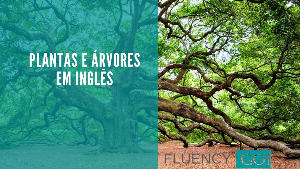Árvores em inglês