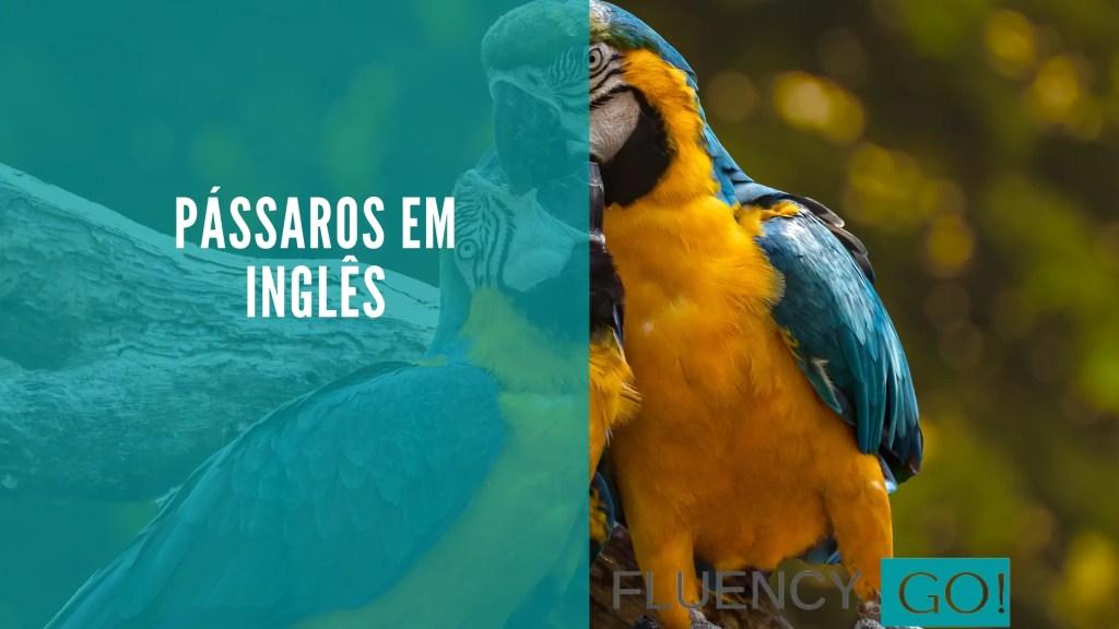 Pássaros em inglês