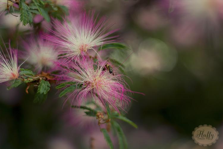 Fotografias de flores