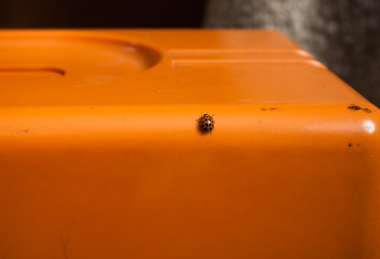 orange sewing machine with orange ladybug friend