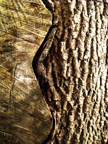 wavy tree and bark