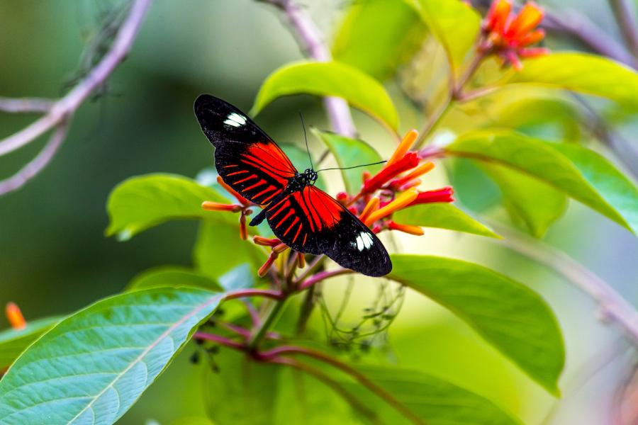 Butterfly Exhibit-48 copy