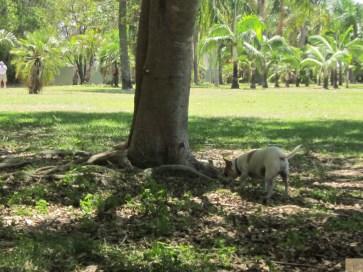 Dog Park Trees