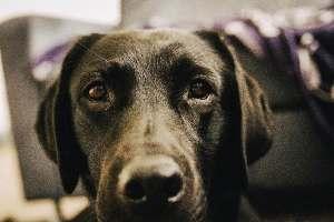 flummi-muede-hund-dogblog-flummisdiary