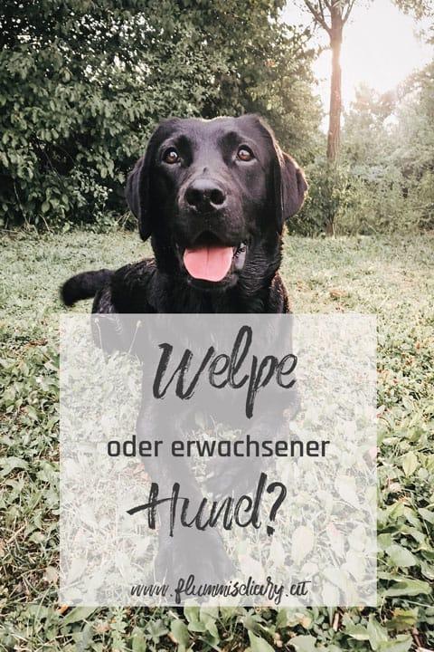 Pinterest-flummi-welpe-oder-erwachsener-hund