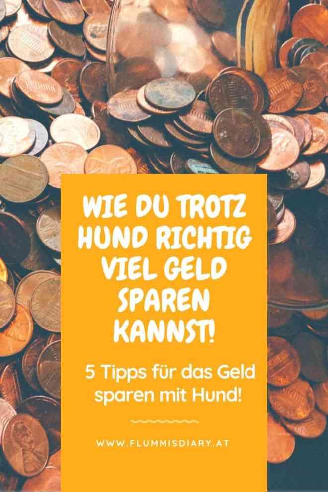 geld-sparen-mit-hund-tipps