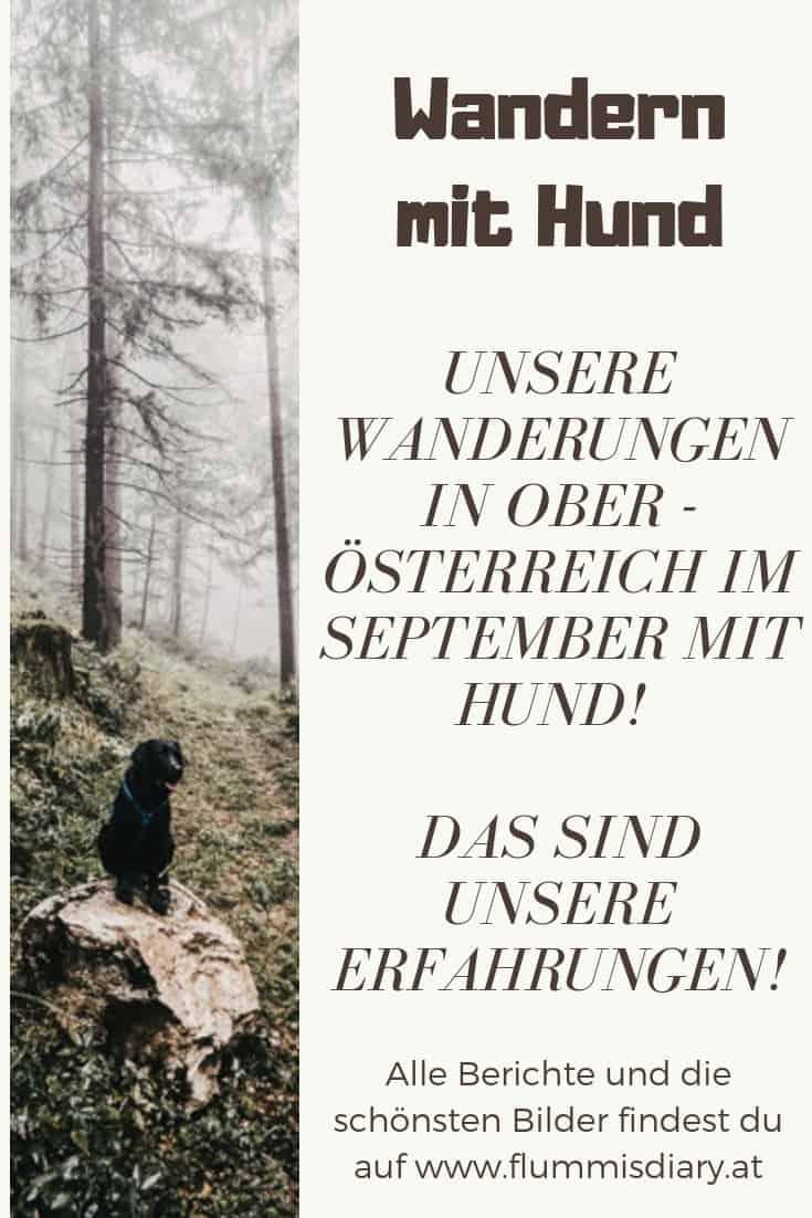 wandern-mit-hund-in-oberoesterreich