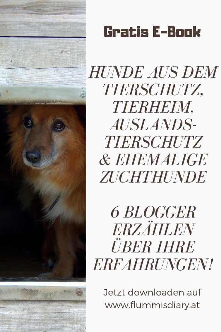 hunde-mit-vergangenheit-kostenlos-ebook