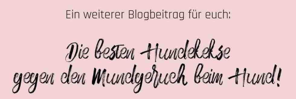 mundgeruch-banner