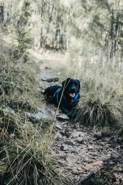 wandern-mit-hund-skigebiet