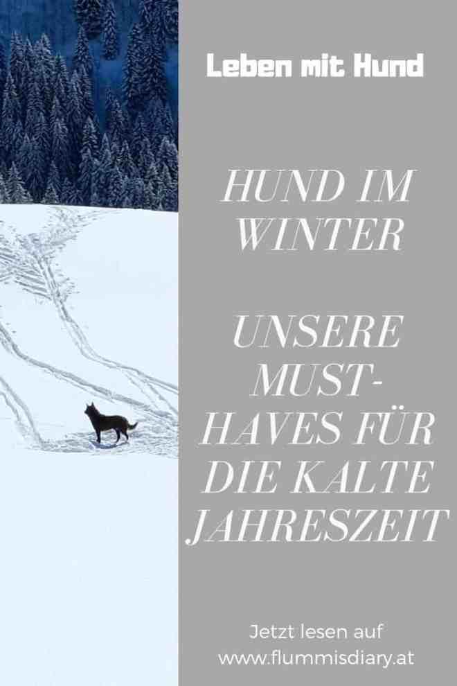 hund-im-winter-must-haves-tipps