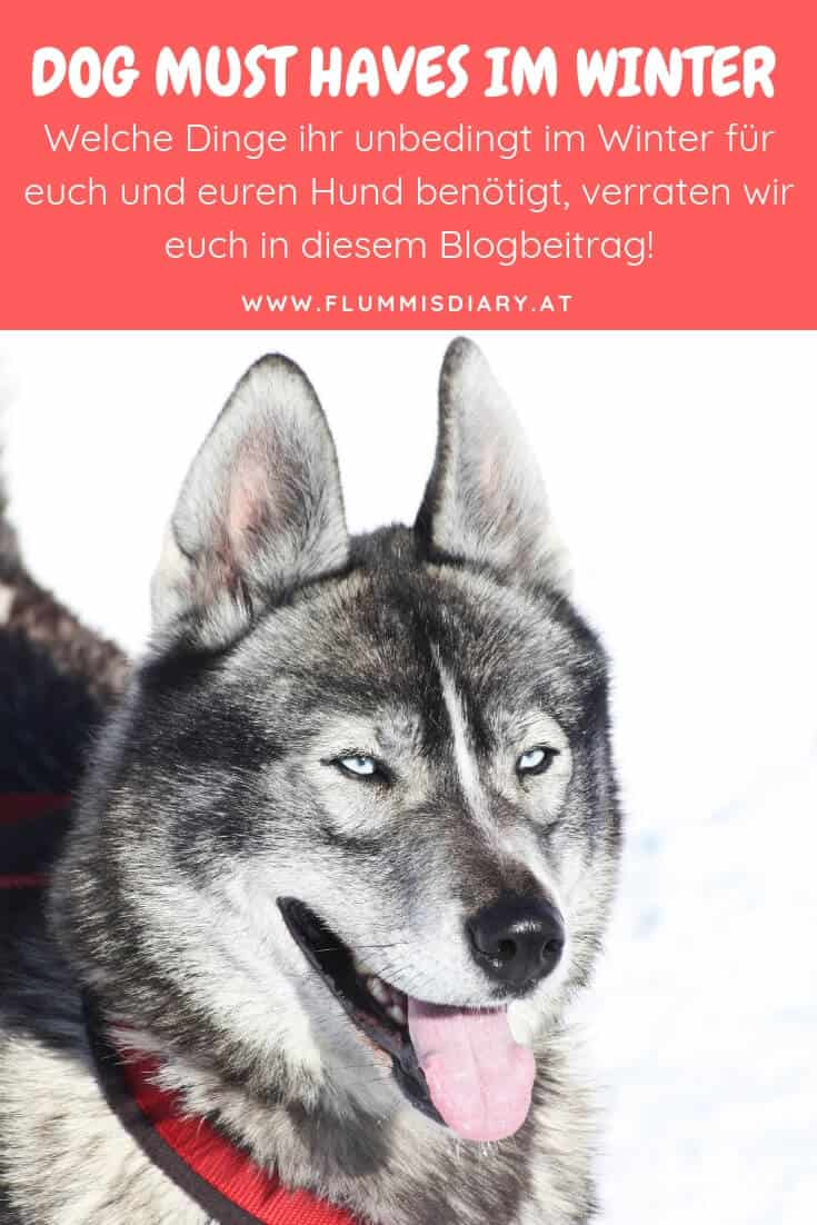 must-haves-hund-im-winter