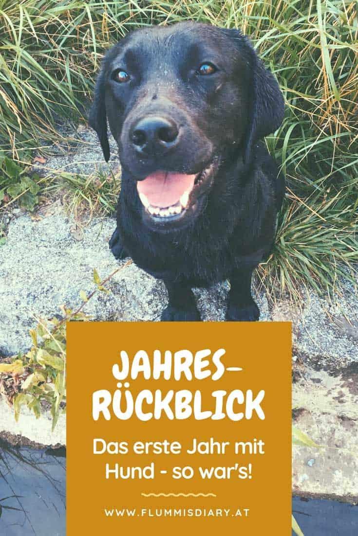 jahresrückblick-flummi-hund-diary