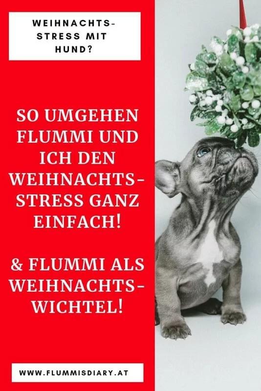 weihnachten-stress-hund-hundeblog