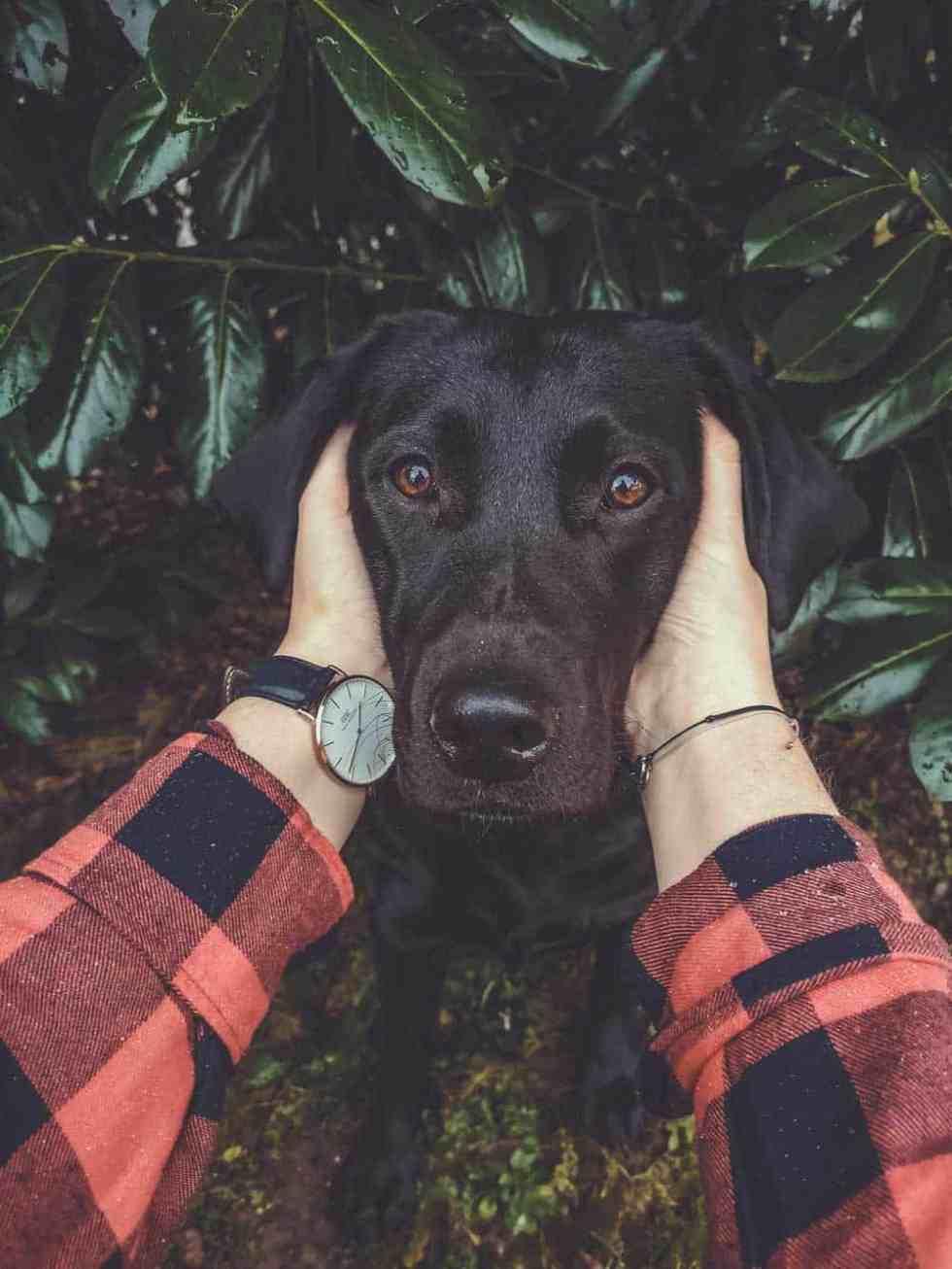 Flummis-diary-vollzeitjob-hund