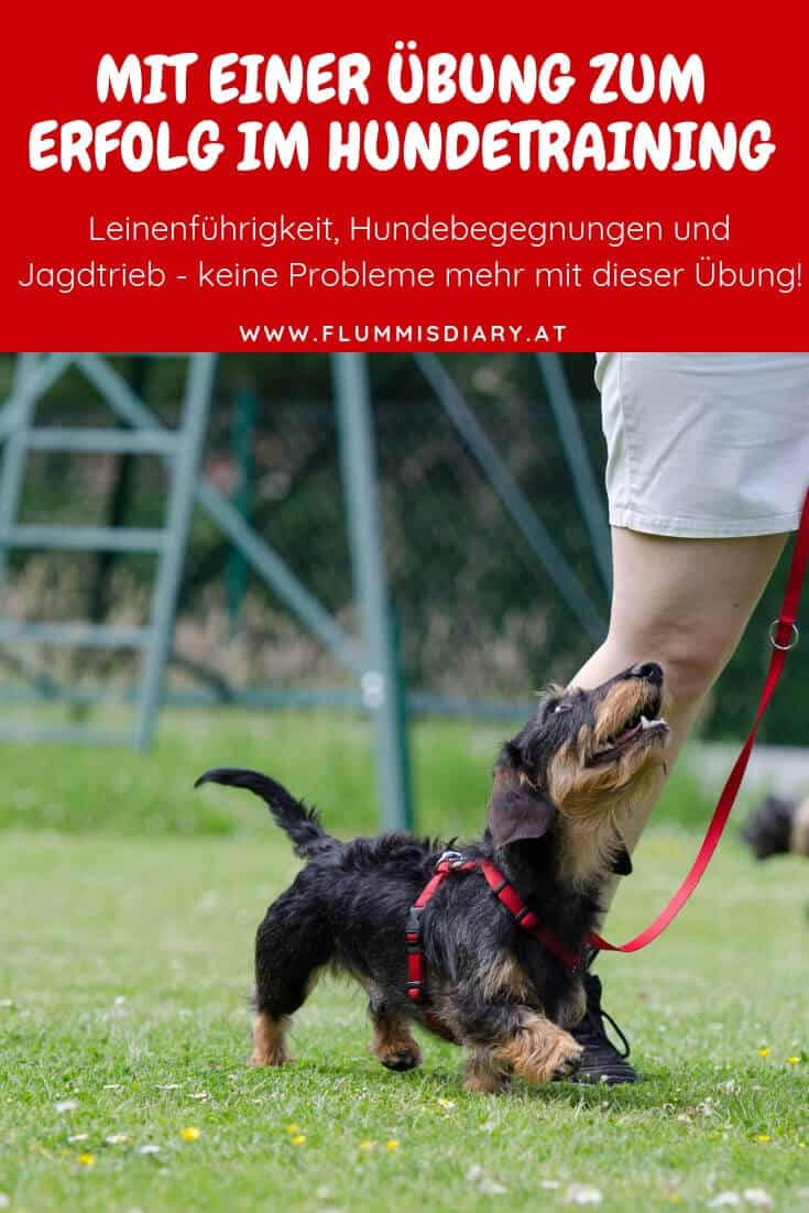 bindung-hund-uebung-training-hundetraining