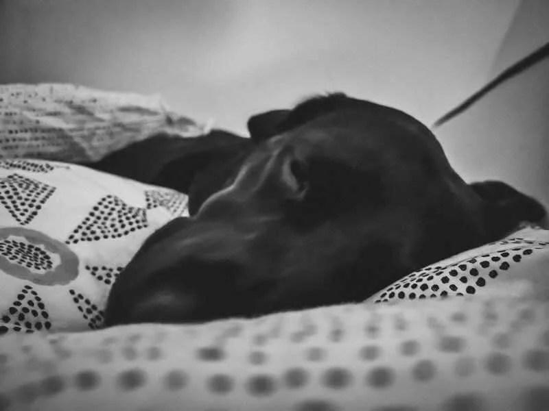 flummi-im-winterschlaf-monatspfoto