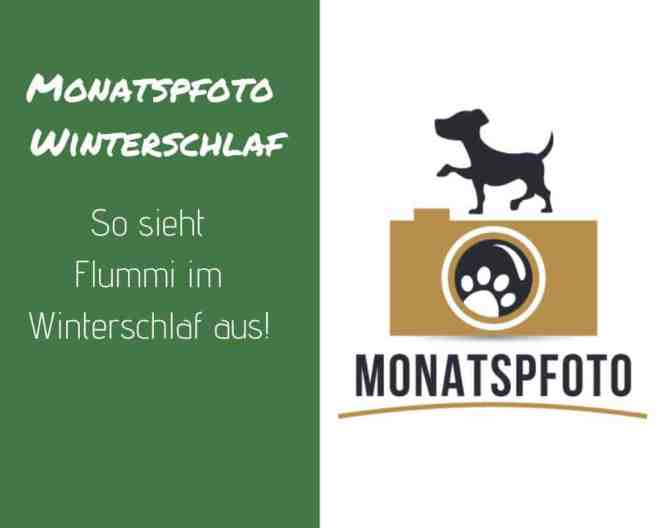 flummi-winterschlaf-monatspfoto-jaenner
